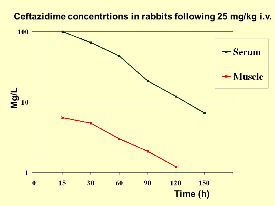 Ceftazidime concentrtions in rabbits following 25 mg/kg i.v.