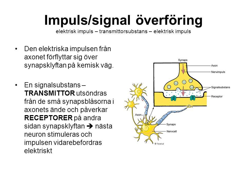 Impuls/signal överföring elektrisk impuls – transmittorsubstans – elektrisk impuls