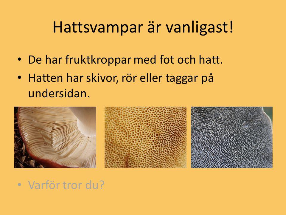 Hattsvampar är vanligast!