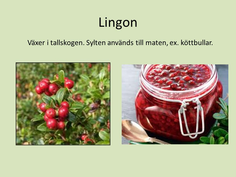 Lingon Växer i tallskogen. Sylten används till maten, ex. köttbullar.