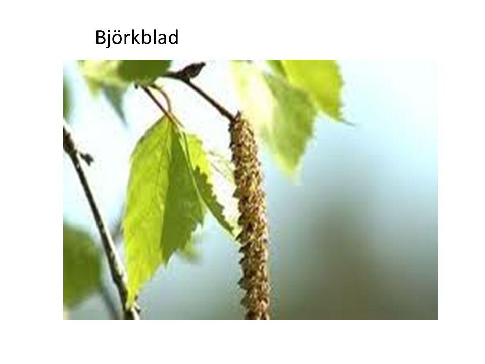 Björkblad