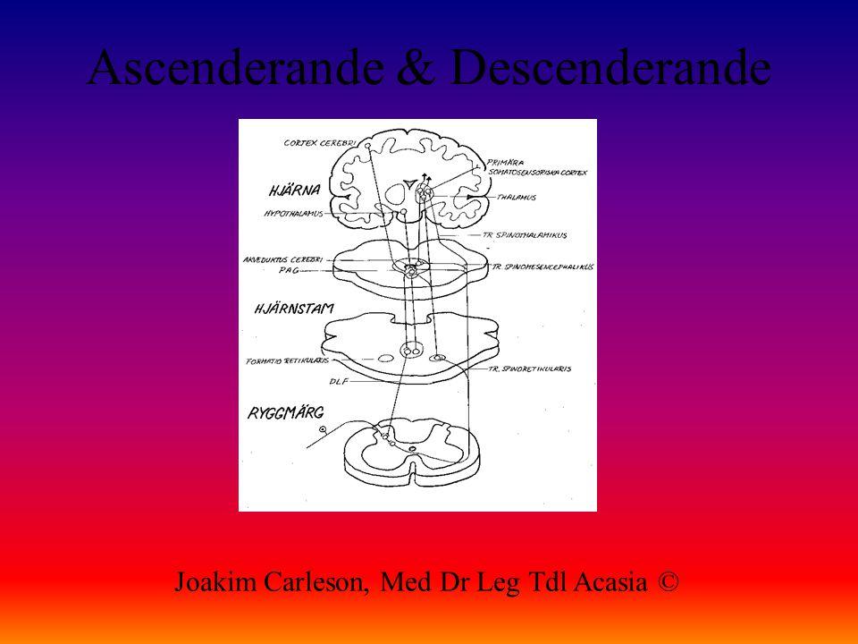 Ascenderande & Descenderande