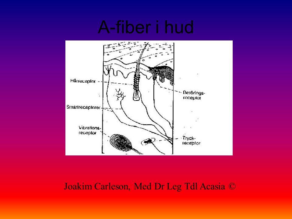 A-fiber i hud Joakim Carleson, Med Dr Leg Tdl Acasia ©