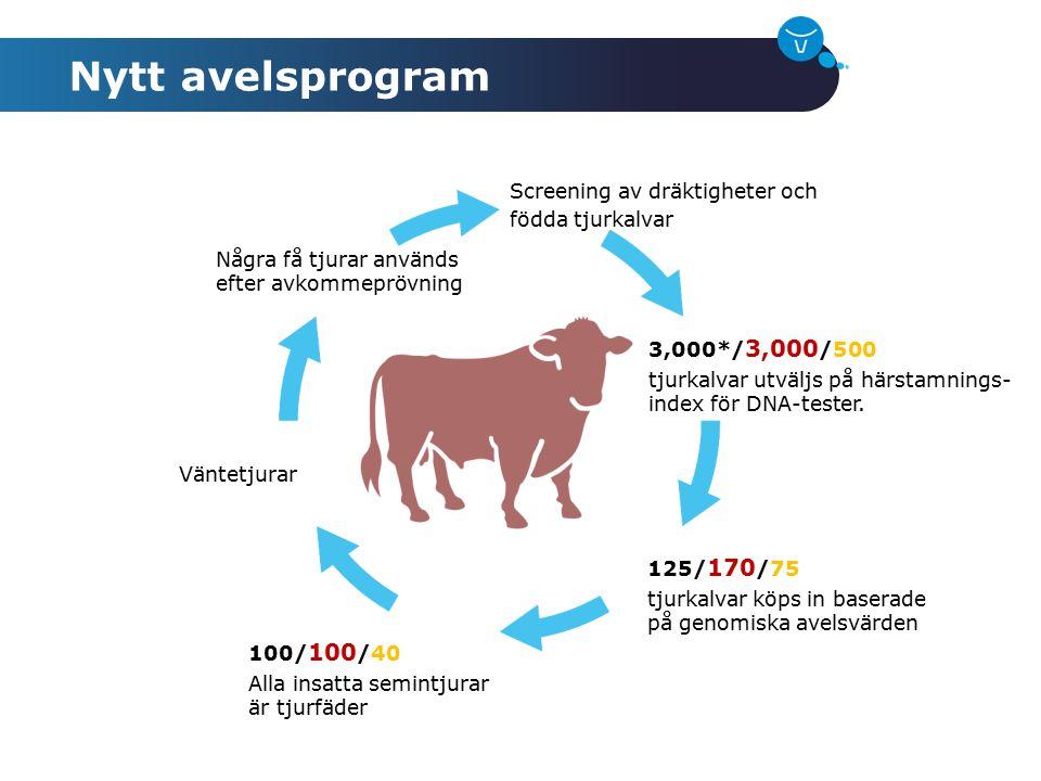 Nytt avelsprogram Screening av dräktigheter och födda tjurkalvar