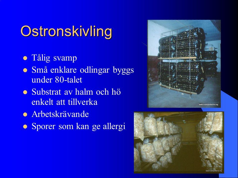 Ostronskivling Tålig svamp Små enklare odlingar byggs under 80-talet