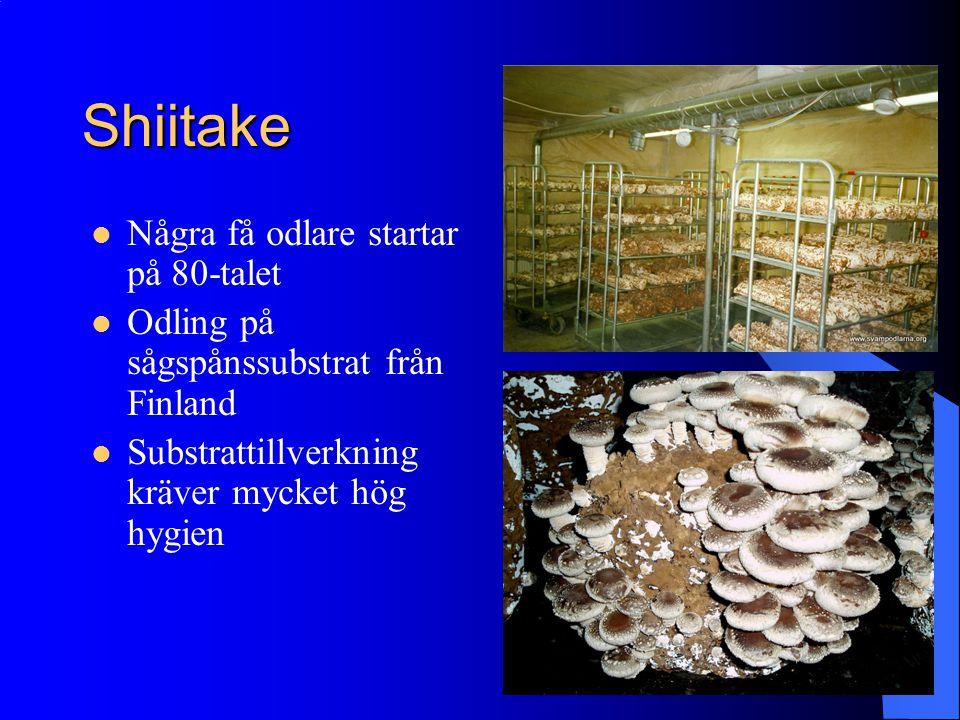 Shiitake Några få odlare startar på 80-talet