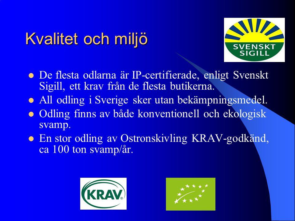 Kvalitet och miljö De flesta odlarna är IP-certifierade, enligt Svenskt Sigill, ett krav från de flesta butikerna.