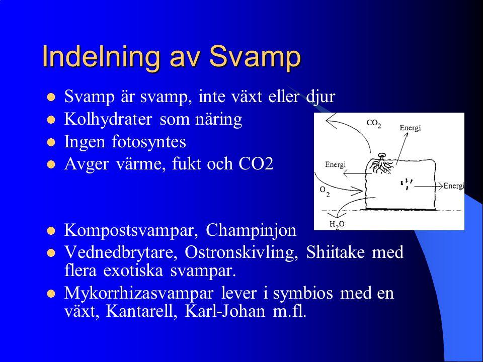 Indelning av Svamp Svamp är svamp, inte växt eller djur