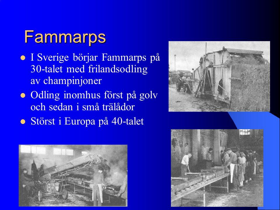 Fammarps I Sverige börjar Fammarps på 30-talet med frilandsodling av champinjoner. Odling inomhus först på golv och sedan i små trälådor.