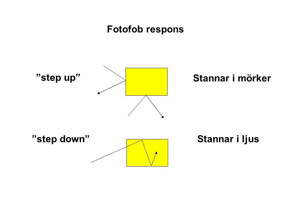 Fotofob respons step up step down Stannar i mörker Stannar i ljus