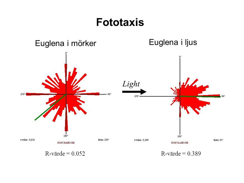 Fototaxis Euglena i ljus Euglena i mörker Light R-värde = 0.389