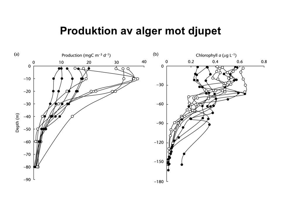 Produktion av alger mot djupet
