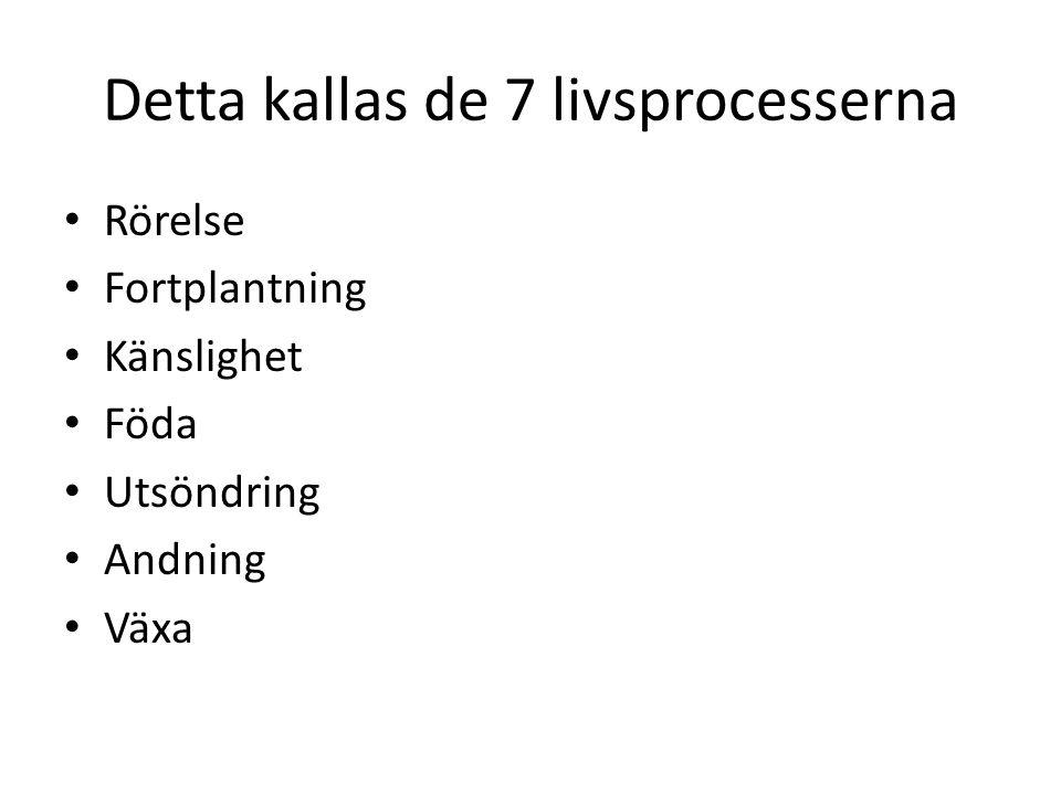Detta kallas de 7 livsprocesserna
