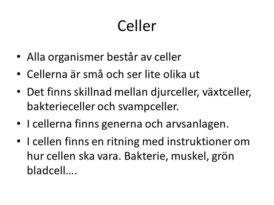 Celler Alla organismer består av celler