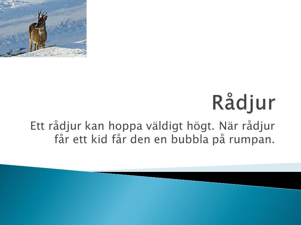 Rådjur Ett rådjur kan hoppa väldigt högt. När rådjur får ett kid får den en bubbla på rumpan.