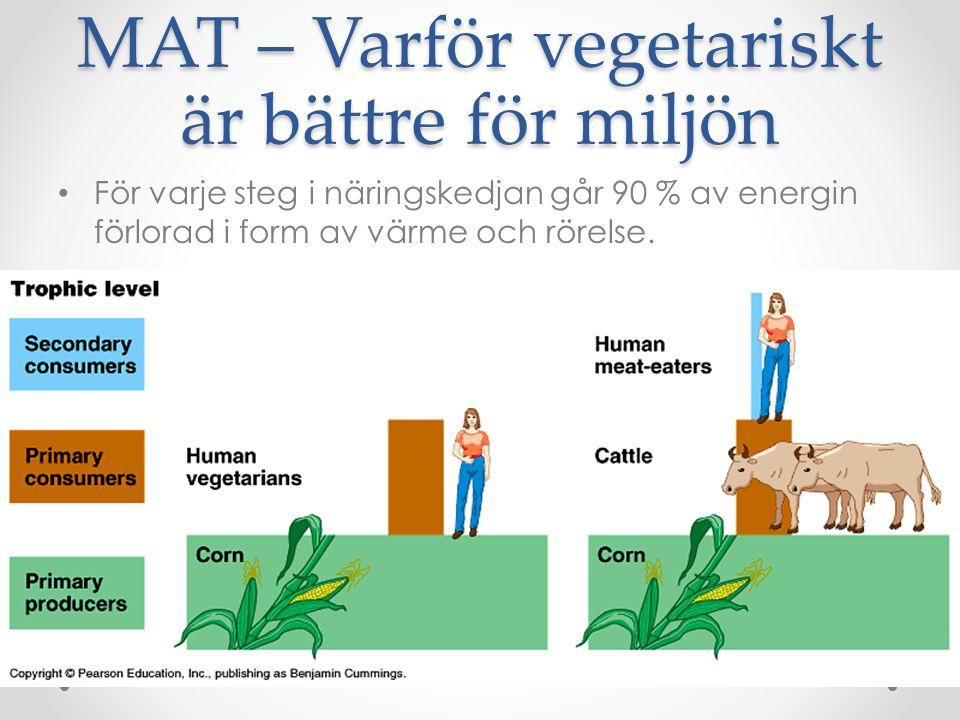 MAT – Varför vegetariskt är bättre för miljön