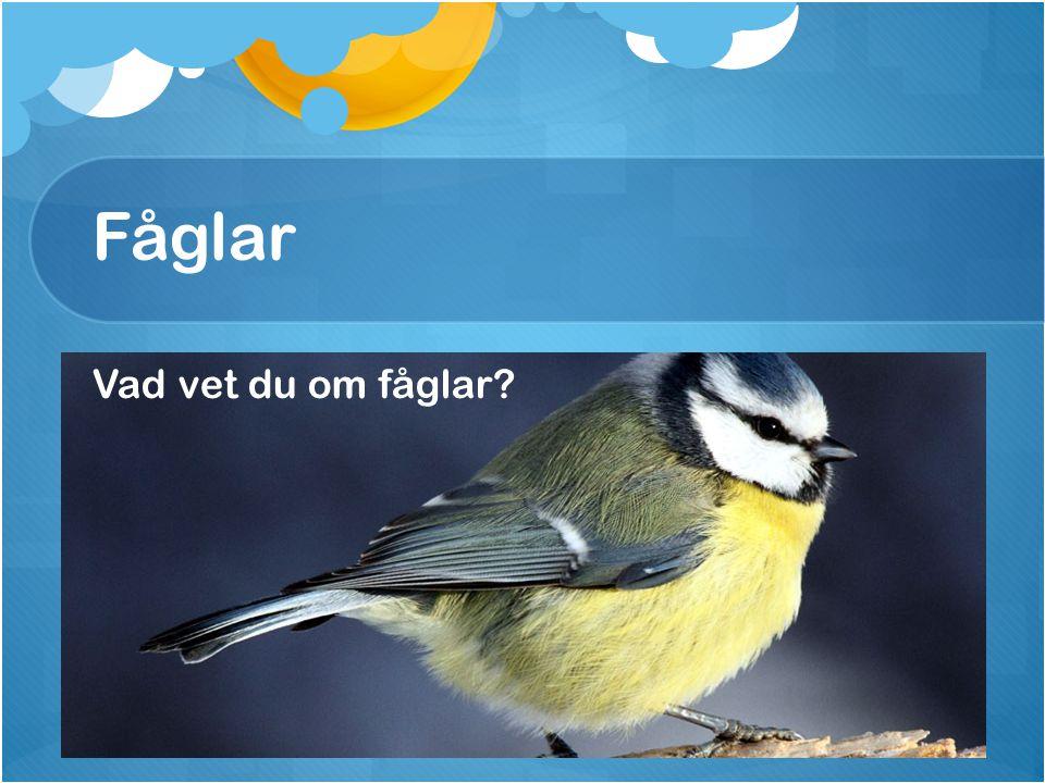 Fåglar Vad vet du om fåglar