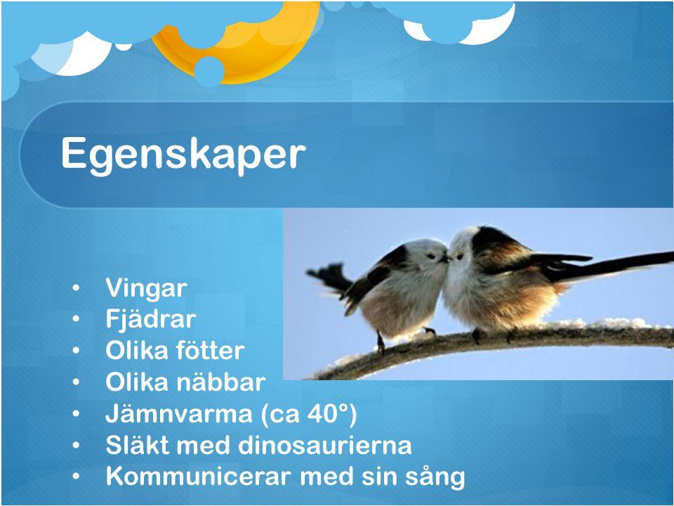 Egenskaper Vingar Fjädrar Olika fötter Olika näbbar Jämnvarma (ca 40°)