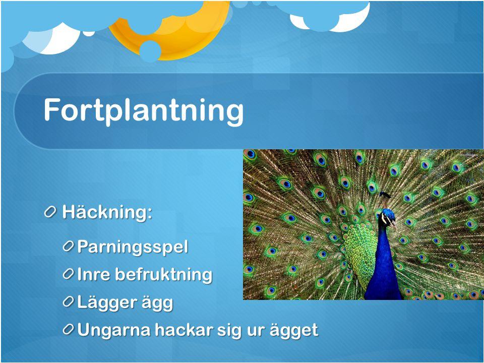 Fortplantning Häckning: Parningsspel Inre befruktning Lägger ägg