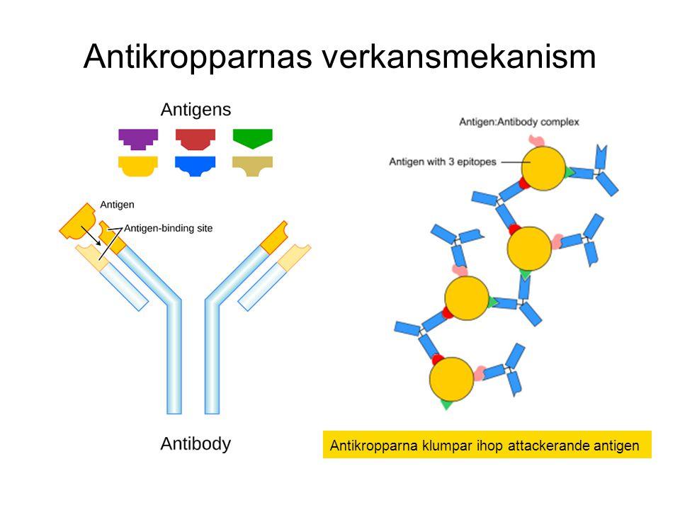 Antikropparnas verkansmekanism