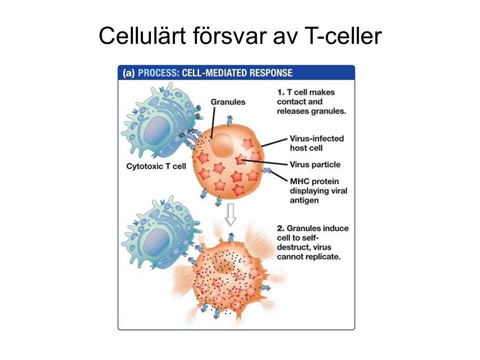 Cellulärt försvar av T-celler