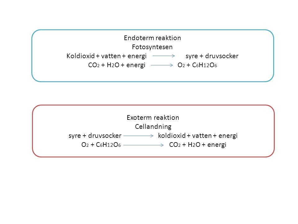 Koldioxid + vatten + energi syre + druvsocker