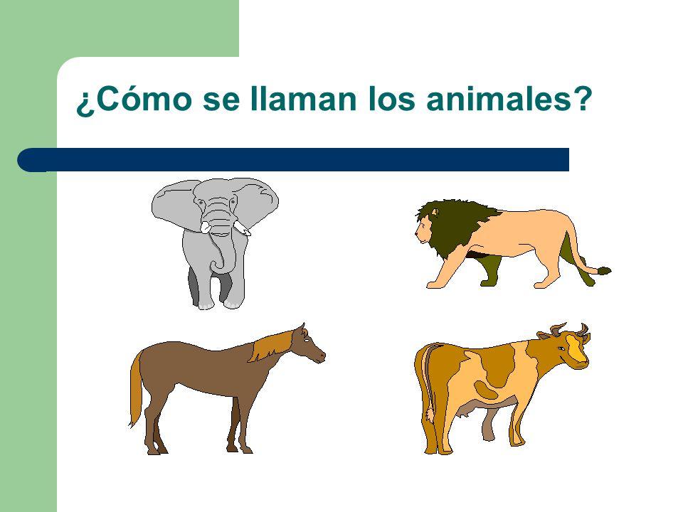 ¿Cómo se llaman los animales