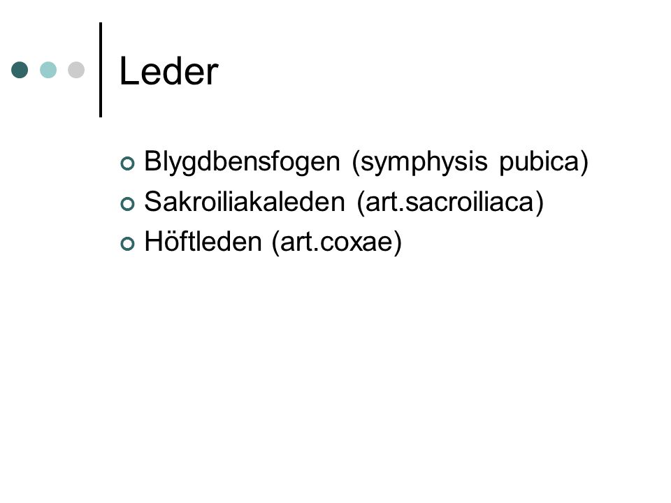 Leder Blygdbensfogen (symphysis pubica)