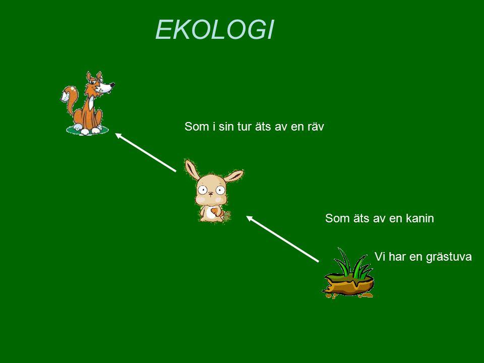 EKOLOGI Som i sin tur äts av en räv Som äts av en kanin