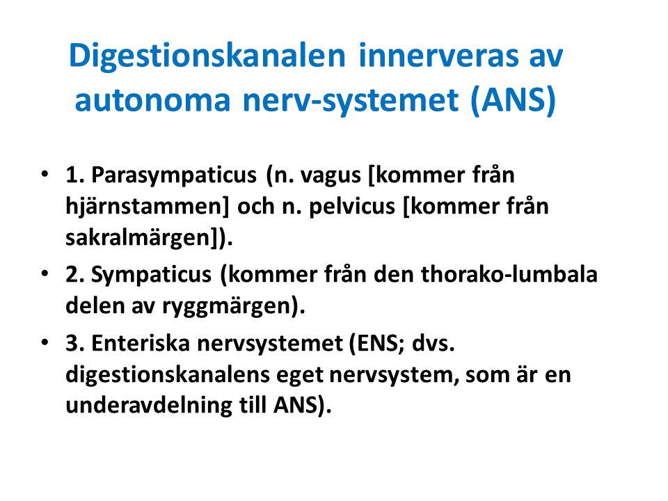 Digestionskanalen innerveras av autonoma nerv-systemet (ANS)