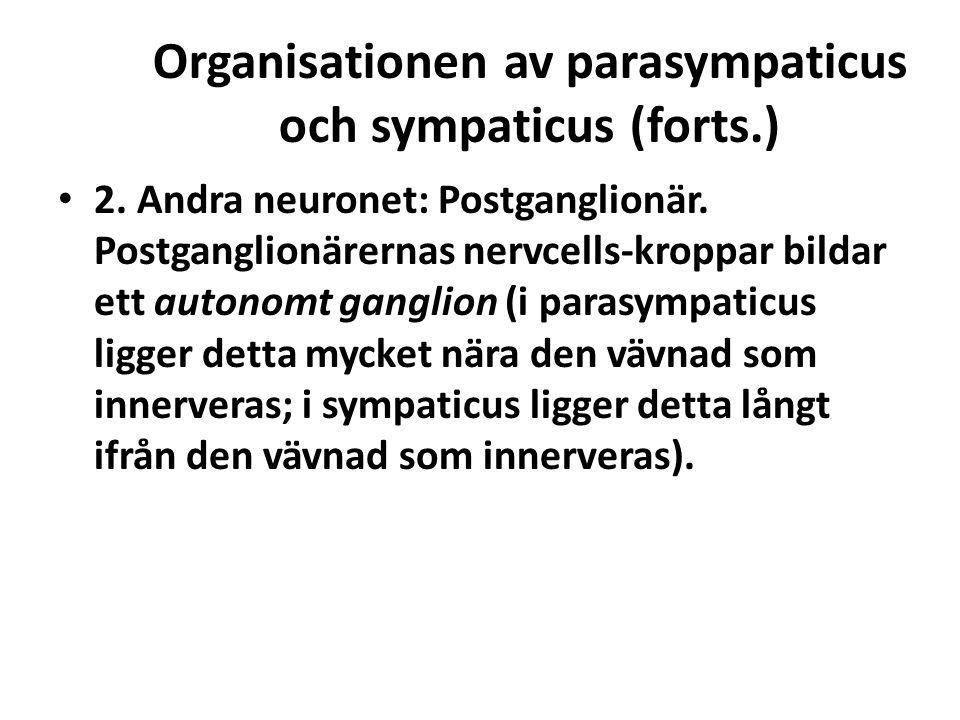 Organisationen av parasympaticus och sympaticus (forts.)