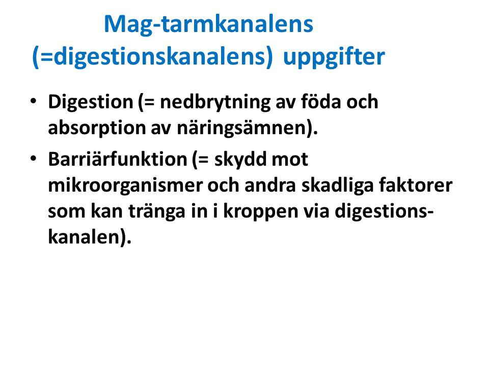 Mag-tarmkanalens (=digestionskanalens) uppgifter