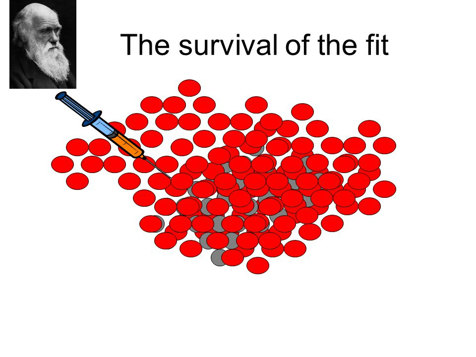 The survival of the fit
