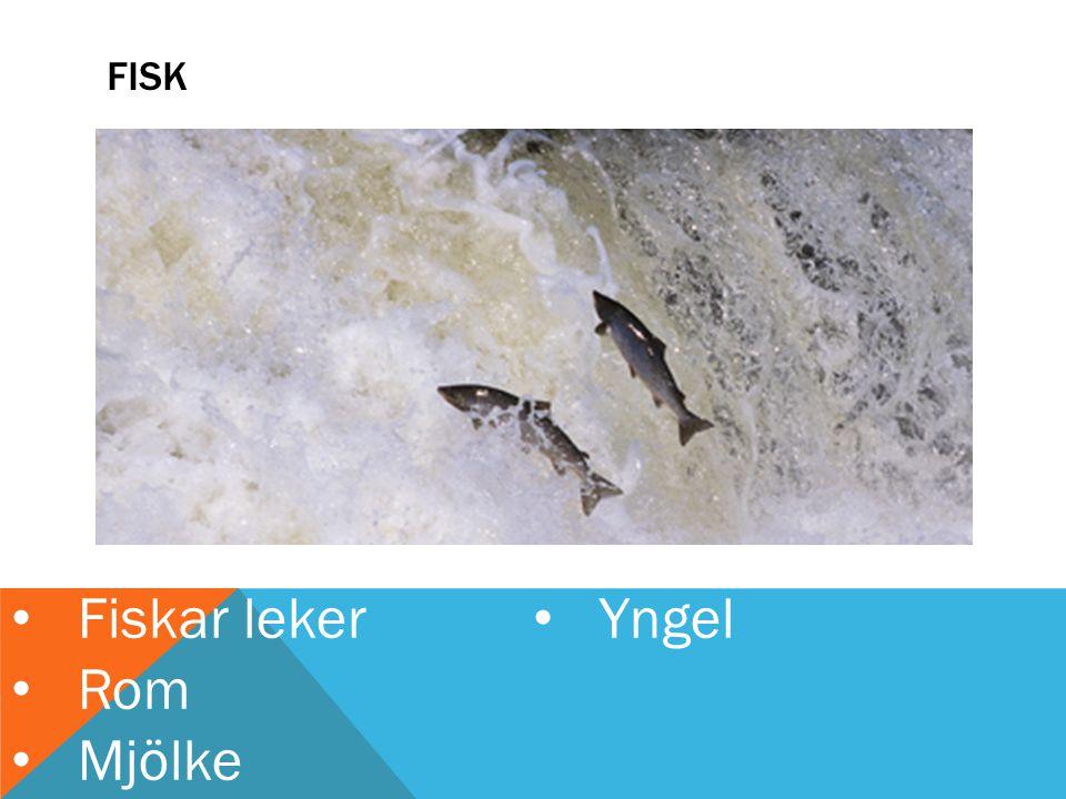 Fiskar leker Yngel Rom Mjölke fisk