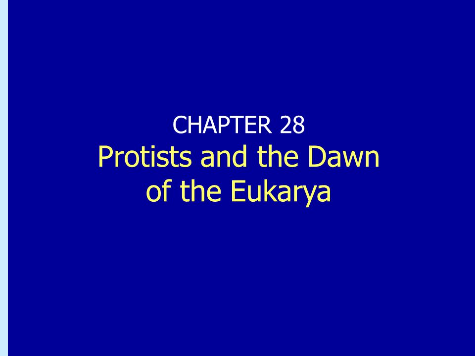 CHAPTER 28 Protists and the Dawn