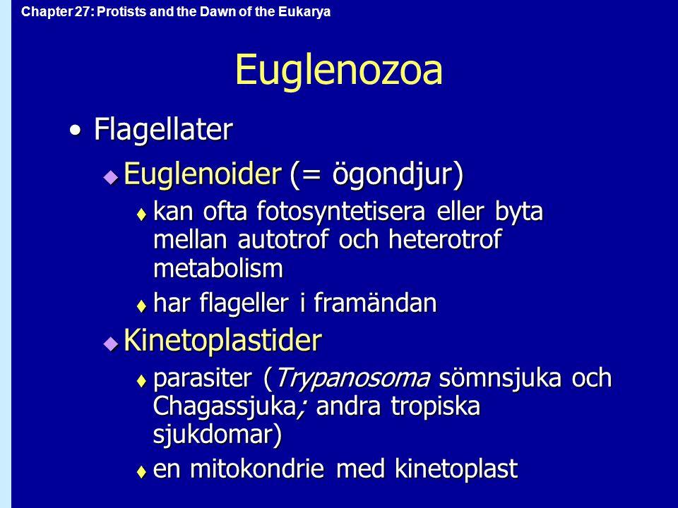 Euglenozoa Flagellater Euglenoider (= ögondjur) Kinetoplastider