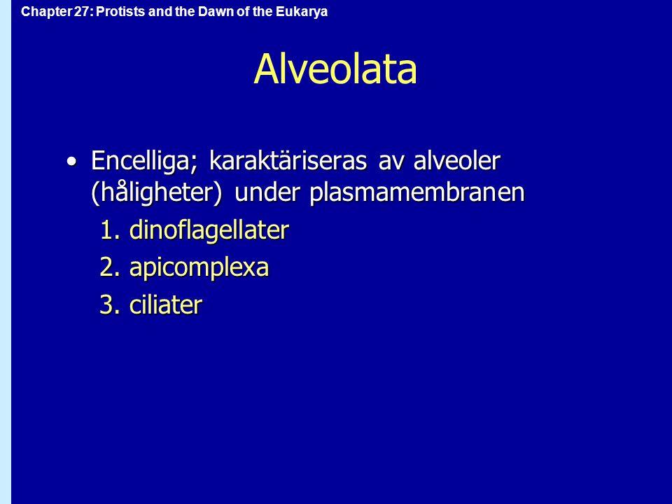 Alveolata Encelliga; karaktäriseras av alveoler (håligheter) under plasmamembranen. 1. dinoflagellater.