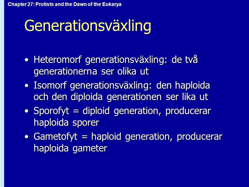 Generationsväxling Heteromorf generationsväxling: de två generationerna ser olika ut.