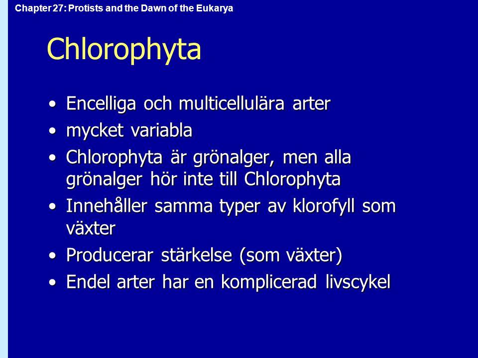 Chlorophyta Encelliga och multicellulära arter mycket variabla