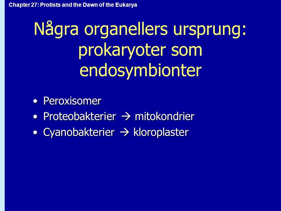 Några organellers ursprung: prokaryoter som endosymbionter