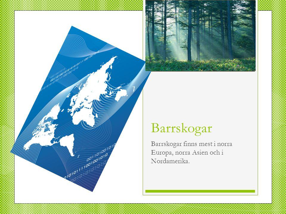 Barrskogar finns mest i norra Europa, norra Asien och i Nordamerika.