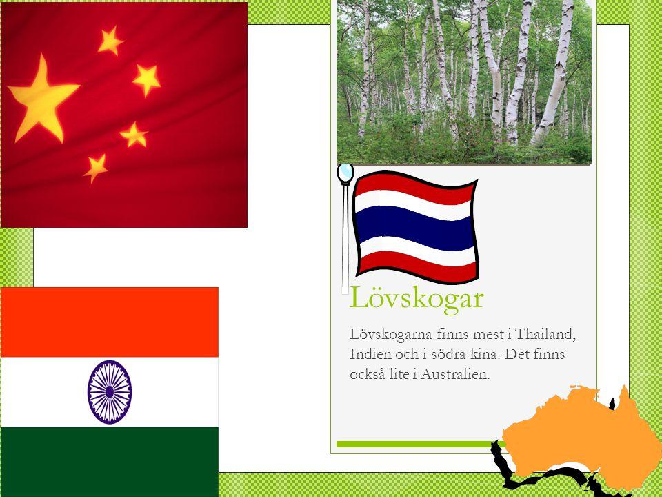 Lövskogar Lövskogarna finns mest i Thailand, Indien och i södra kina.