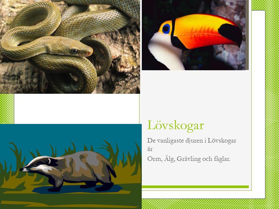 De vanligaste djuren i Lövskogar är Orm, Älg, Grävling och fåglar.