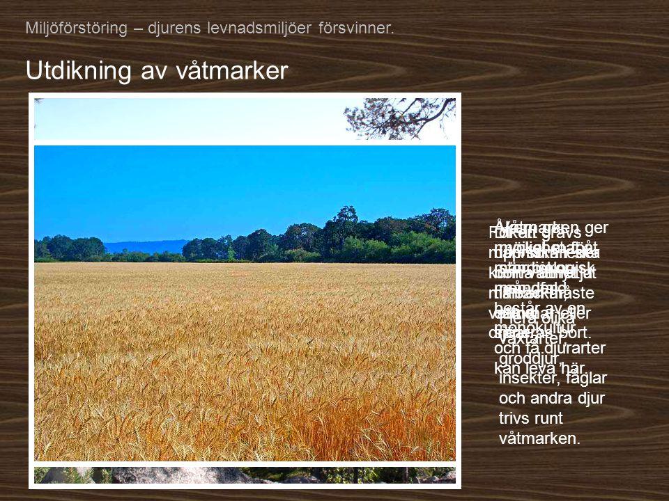Utdikning av våtmarker