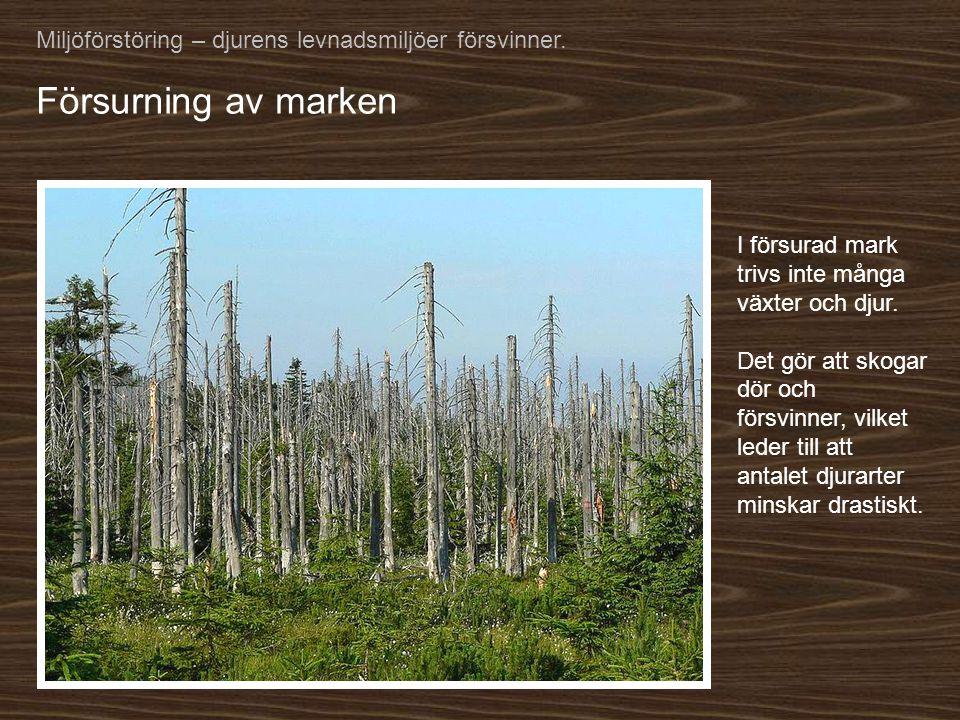 Miljöförstöring – djurens levnadsmiljöer försvinner.