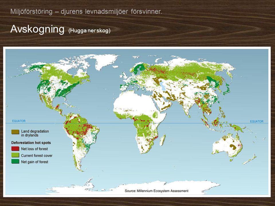 Avskogning (Hugga ner skog)