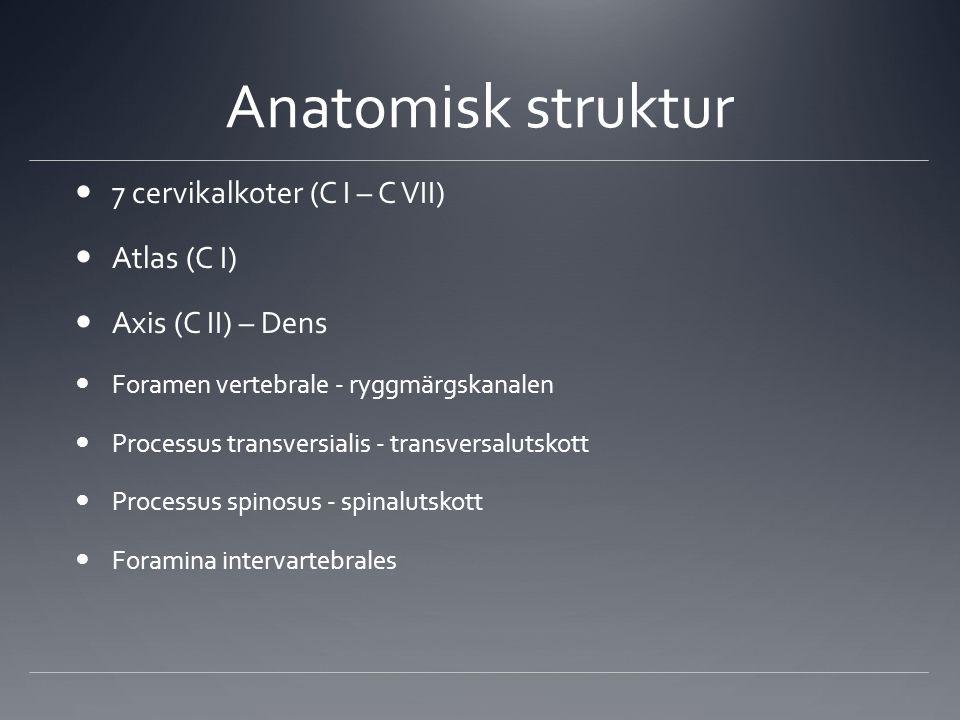 Anatomisk struktur 7 cervikalkoter (C I – C VII) Atlas (C I)