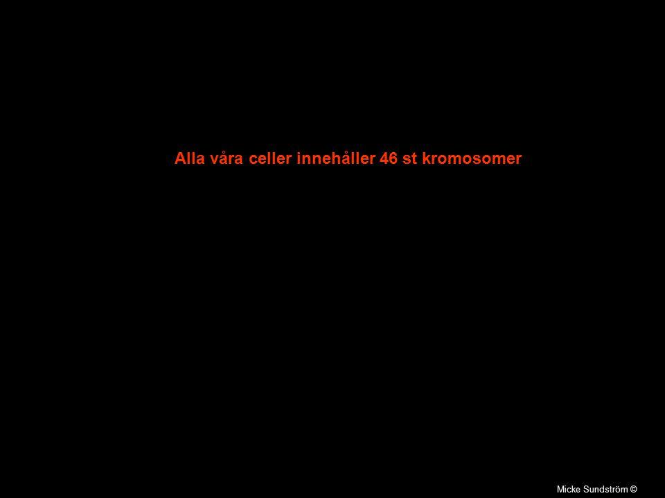 Alla våra celler innehåller 46 st kromosomer