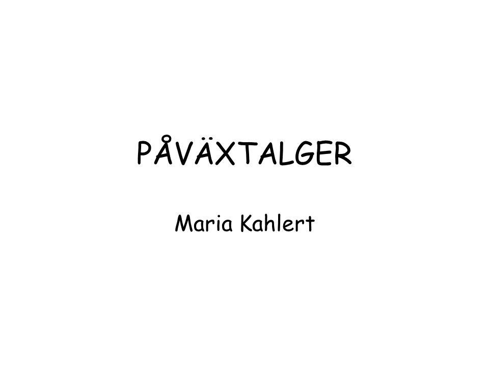 PÅVÄXTALGER Maria Kahlert