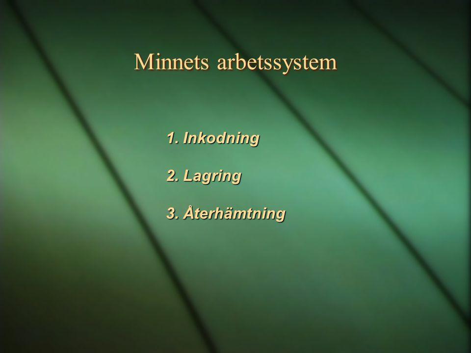 Minnets arbetssystem 1. Inkodning 2. Lagring 3. Återhämtning